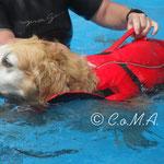 beim Schwimmunterricht bei FitDog ...