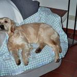mein Sessel ... mittlerweile bevorzuge ich das Sofa!