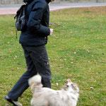 Foxi läuft durch die Beine (man sieht es zwar nicht, aber sie tut es wirklich!).
