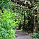 Wie im Märchenwald - der Trail hat mich wieder