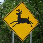Selbst die Hirsche springen hier anders.