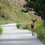 Besuch auf dem Trail, kurz vor Princeton.