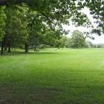 Im Rideau Park.