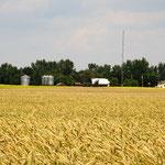 .... und Getreideanbau prägen das Landschaftsbild.