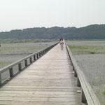 大井川の蓬莱橋
