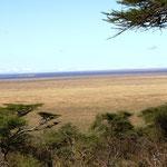 ein letzter Blick in die Serengeti