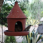 Vogelfütterung im Camp