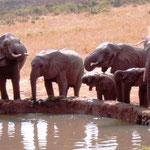 Elefanten am Wasserloch vor der Lodge