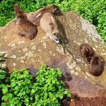 Klippschliefer am Rift Valley