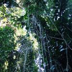 ein Stückchen Dschungel