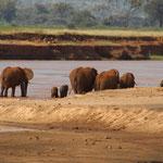 Elefanten am Ewaso Ngiro