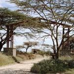 Eingang zur Serengeti