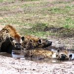 bei der Hitze kann man auch mal baden