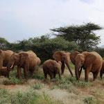 Elefanten mit Baby