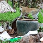 Mülltrennung auf afrikanisch