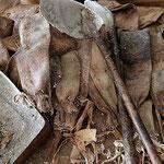 Werkzeug für den Anbau und die Ernte von Cochinilla, Guatiza