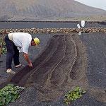 Bauer beim Sähen, Vegueta