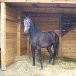 Gian in seinem neuen Stall