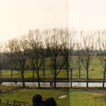 Kanalpappeln im Bereich Lange Reihe