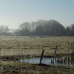 Wiedervernässungsprojekt der Hansestadt Lübeck im Krummesser Moor