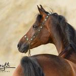 Wir finden die passende Motive, die den Charakter und Schönheit Deines Pferdes festhalten :)