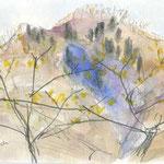 ダンコウバイと華厳山 春にまっさきに咲き始めるダンコウバイ まだヒルの心配なく歩ける早春 西山が一番美しいときです