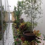 沖縄タイムス社12F役員フロア 光庭植栽