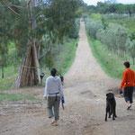 Der Weg zum Strand durch die Olivenbaum-Allee