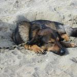 ... es schläft sich so schön im Sand!