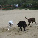 Spielgefährte am Strand gefunden!