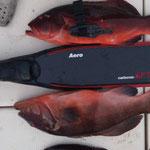 スジアラ Carbonio G.F.T - Aero/Medium&Carbon Knife
