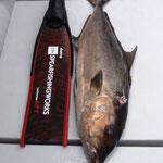 ヒレナガカンパチ16kg Carbonio G.F.T - Aero/Hard/Pesca