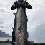 カンパチ 150cm/28kg E.S.S & エクストリームラバー16mm一本引き