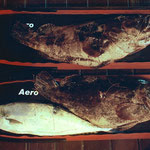 Grouper Carbonio G.F.T - Aero/Soft
