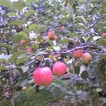 三角山ふもとの斉藤農園 2011.11