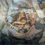 Bones, varnished paper, 14,8 x 25,5 cm, 2018