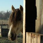 Pferdegerechte Haltung nach LAG