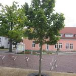 Premnitz, Rathausvorplatz, Baumscheibe Wurzel