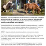 2017 Attractiepark Slagharen stopt met pony's bij vakantiehuisjes.