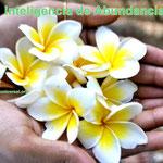 INTELIGENCIA DE PROSPERIDAD - PROSPERIDAD UNIVERSAL