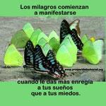 CREADOR DE MILAGROS - PROSPERIDAD UNIVERSAL