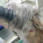眼底を診て、網膜や視神経の異常をチェックします。