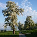 Aussicht Birken Ranch Urswil