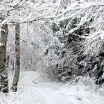hiver en Ariège-Pyrénées (sentier cathare)