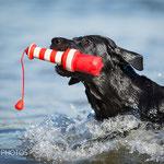 Foto: Michèle Baumbach I dogphotos.de