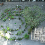 Assemblée Générale des plantes vertes, Dispersion Contrôlée