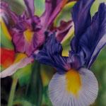 Doppelte Iris
