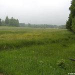 Die Struth wird durch das Feuchtgebiet des Volkertsbach durchschnitten