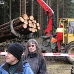 Abtransport der Stämme durch das Forstamt Simmern