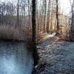 Teich im Wald bei Dichtelbach
